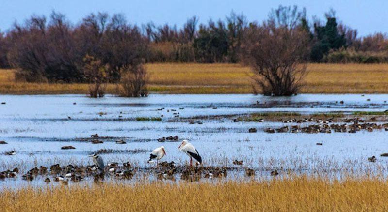Oiseaux du parc Aiguamolls